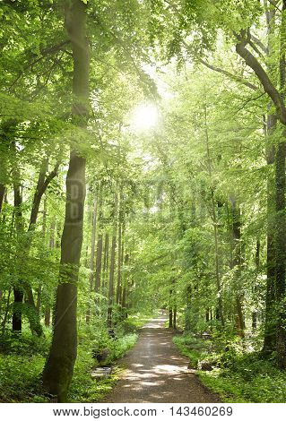 Idyllic forest footpath with green trees and rays of sun falling through. Copy space.