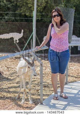 A woman posing near a mountain goat
