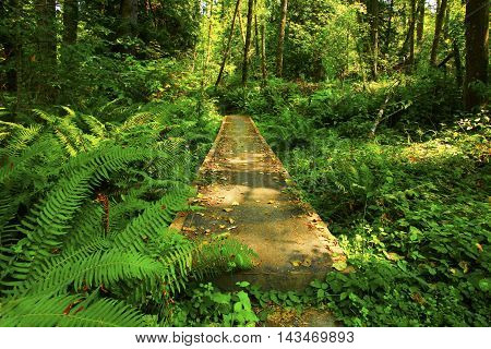 a picture of an exterior Pacific Northwest forest trail boardwalk