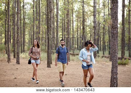 Three Friends Wandering Through A Forest