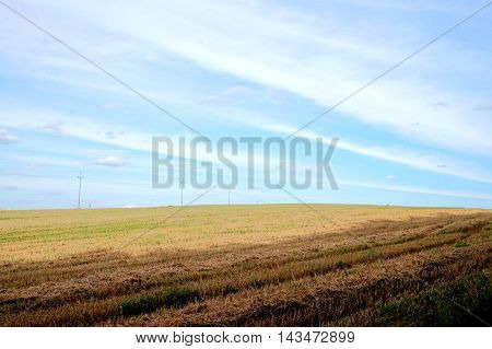 Large field useful as a background or abstract