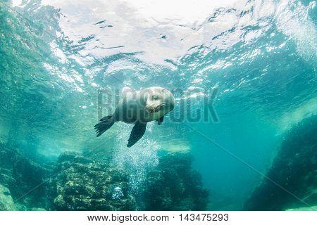 Sea Lion at La Paz in Mexico