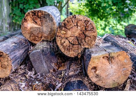 old firewood of pines lying on the grass