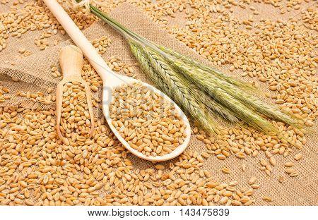 diet supplements - wheat grain on canvas