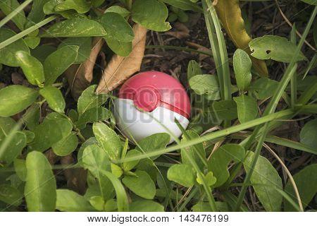 Thailand - August 20, 2016: Pokeball on grass (Pokemon Ball). Pokeball toy of the game Pokemon Go at Thailand.