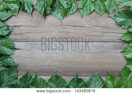 Leaves of Mulberry in arrangement to picture frame on brown wooden background.