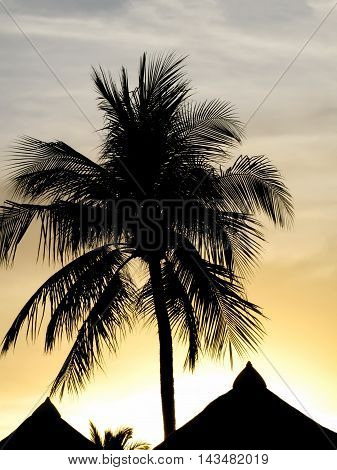 Palm silhouette above thatched roofs in back-light at sunset