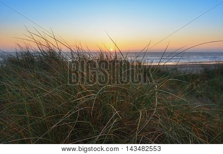 Evening in the dunes and views of the sunset on the sea through the grass.