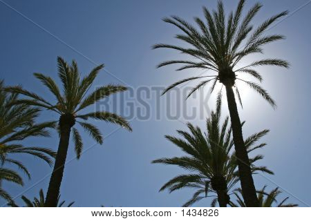 Sunlit Palm Tree