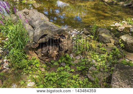 Raccoons Habitat Image - Animal photography with a raccoon and its specific habitat from the Wild Park in Pforzheim Germany.