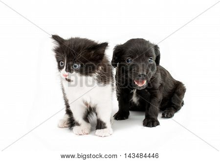 puppy with a kitten on a white background