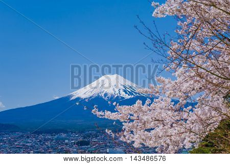 Material obtained by photographing the Fuji and the cherry tree.
