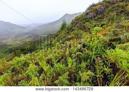 Ferns And Other Plants In The Mountains On A Misty Morning In Africa