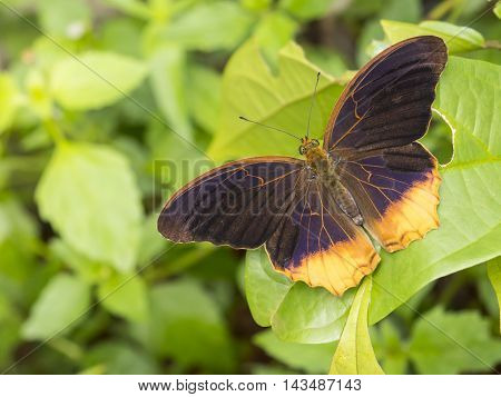 Closeup orange and purple butterfly with on green leaf at Pang Sida National Park Sa Kaeo Thailand