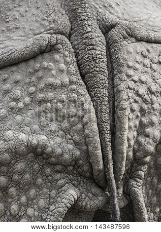 Closeup Of The Strong Armor Of A Rhinoceros