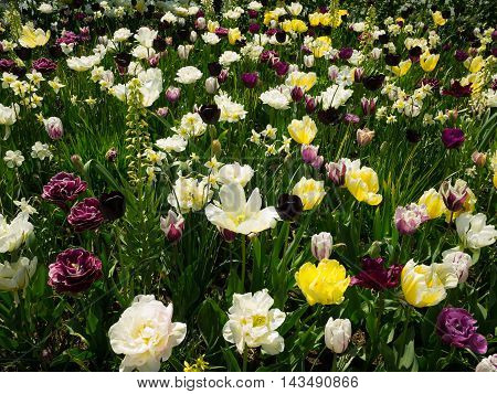 Multicolor flower garden with tulips and other flowers