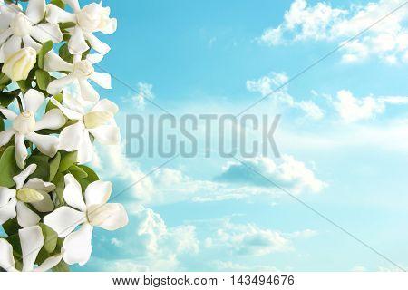 Beautiful white gardenia flower and sky background