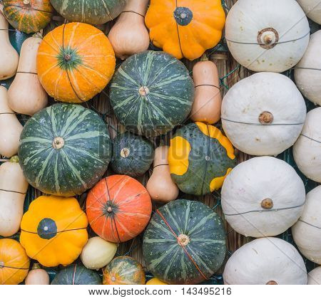 Many Of Pumpkin Decoration On The Wall