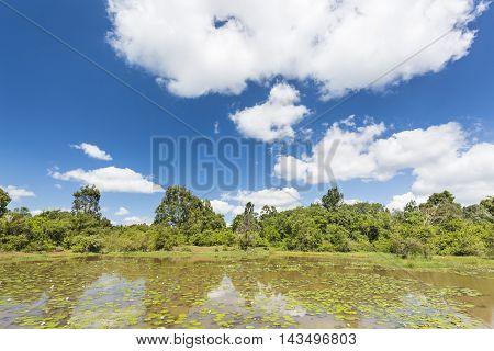 Karura Forest In Nairobi, Kenya With Deep Blue Sky