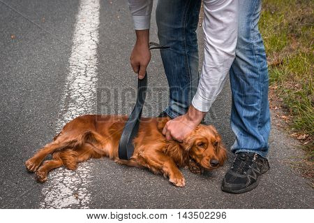 Man Holds A Leather Belt In Hand And He Wants To Hit The Dog