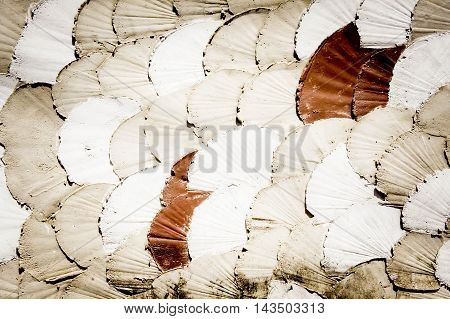 Abstract scallops shell made from cement background