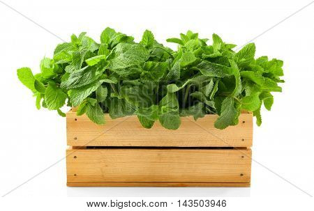 Green mint in crate, isolated on white