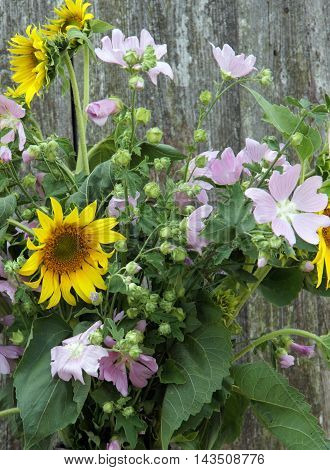 Floral composition of Hollyhock Mallow and Sunflowers