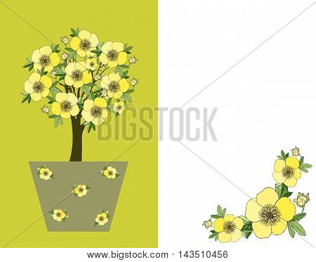 Kuril tea. Bonsai. Cute card with blossom tree in flower pot. Vector illustration.