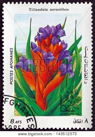 AFGHANISTAN - CIRCA 1985: a stamp printed in Afghanistan shows Tillandsia Aeranthos Flowering Plant circa 1985