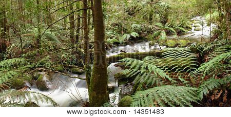 Rainforest river panorama, with tree ferns, mossy boulders, and ancient myrtle beech trees.  Yarra Ranges, Victoria, Australia.  XL file.