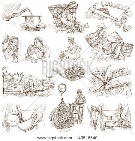 TEA. Agriculture. Life of a farmer. Tea Processing. Collection of an hand drawing illustrations. Pack of full sized hand drawn illustrations. Set of freehand sketches.