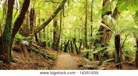 Panorama del camino a través de un bosque húmedo templado frío, con treeferns y myrtle antiguos hayedos.