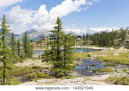 Alpine Landscape With Lake, Mountains And Fir Trees