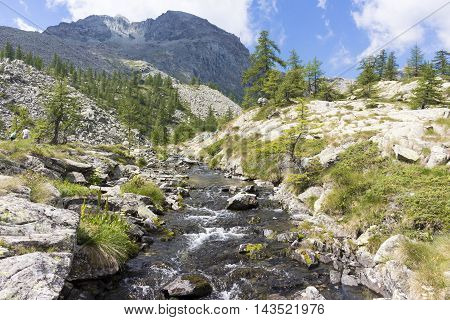 Alpine Landscape With Wood Bridge, River, Mountains And Fir Trees