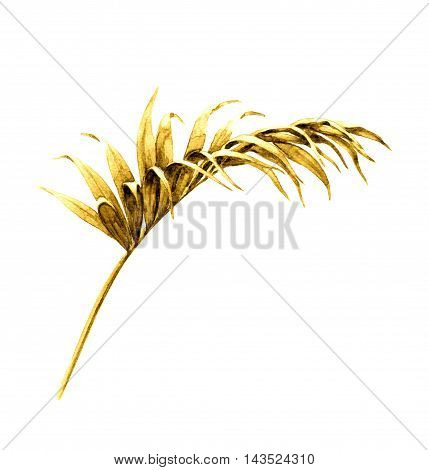 Hand drawn tropical plant. Watercolor golden palm frond. Yellow leaf isolated on white