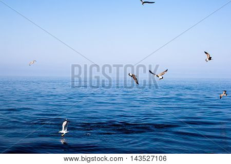 seagulls flying on the sea as a backdrop