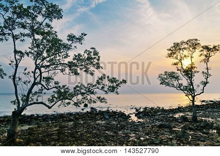Trees on a stones beach in the light of the setting sun