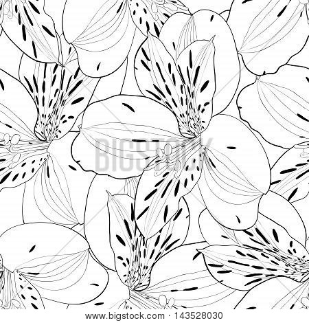 beautiful black and white seamless pattern in alstroemeria with contours. Hand-drawn contour lines and strokes.