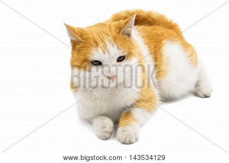 cat  facing, curiou on a white background
