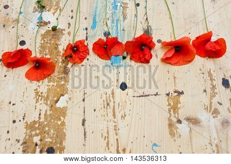 creative unusual still life with poppies on an old wooden table. Top view of red poppies laid out in a row in vintage style.