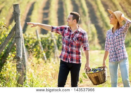 Cheerful  young couple  working at vineyard at harvest time
