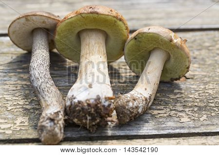 Boletus edulis and birch bolete mushrooms on wooden table close up.