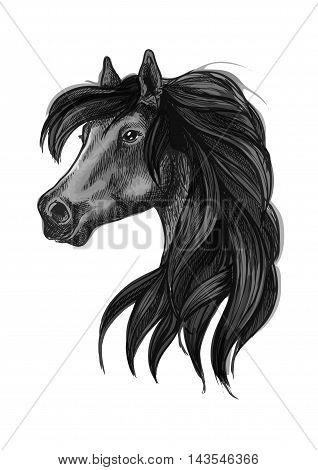 Horse head icon of black arabian stallion. Equestrian sporting competition mascot or t-shirt print design