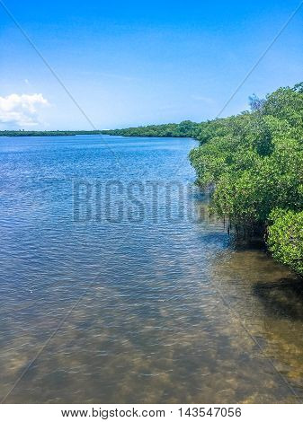 Mangroves And Ocean