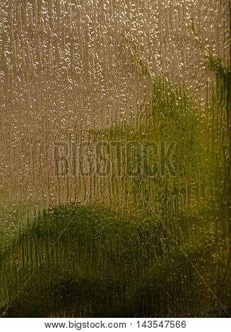 Background with green leaves viewed through textured and translucent glass.