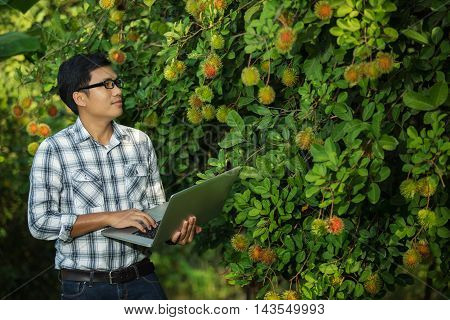 Farmers attractive young man with a laptop stand in the fruit garden The quality check rambutan
