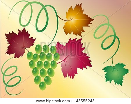 Branch of green grapes with colorful leaves and curls, vector illustration