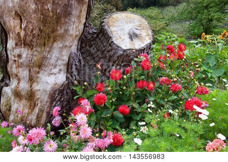 red and pink roses with wildflowers growing next to a dead tree trunk.