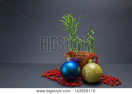 Green Cactus, Hatiora Is A House Plant,christmas Decor