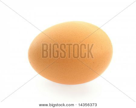 one brown egg isolated on white background